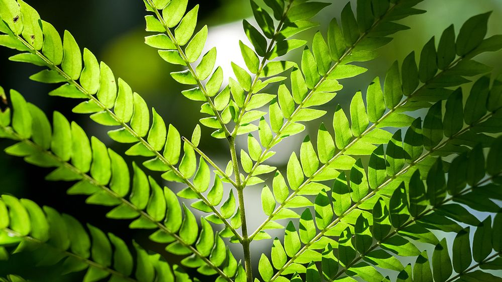 closeup of the green leaves of a plant.